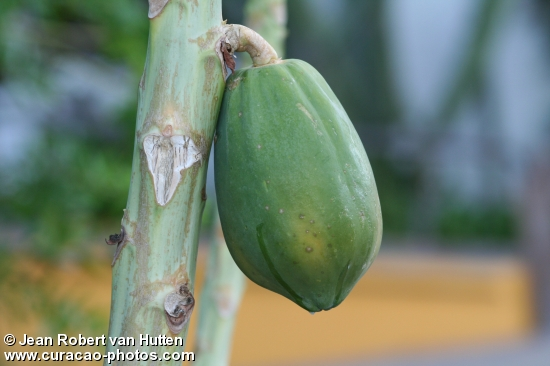 Papayas Fruit